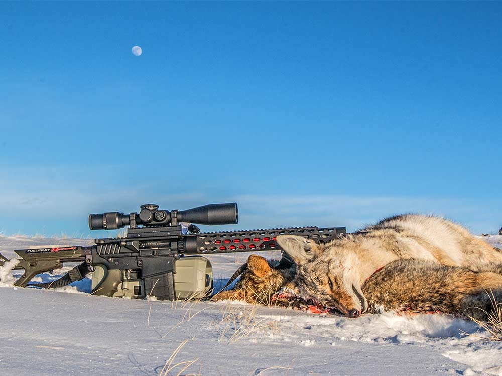 10 Best Cartridges for Coyote Hunting