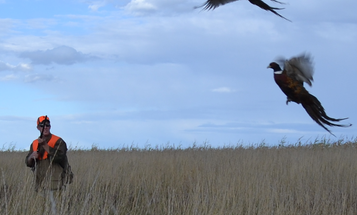 Gear Up For Your First Preserve Bird Hunt