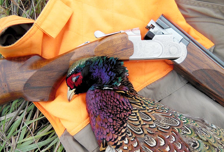 A Beretta Silver Pigeon III and the author's quarry.