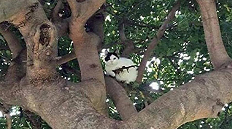 Cat Climbs Tree Armed with Rifle