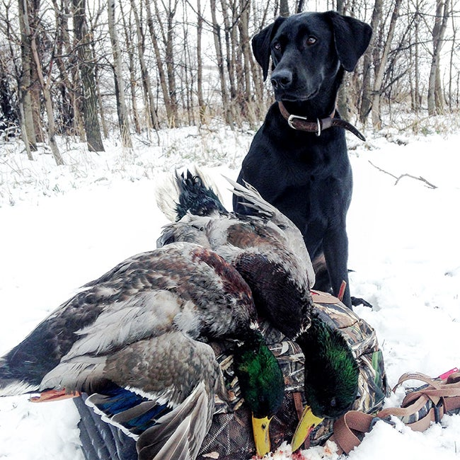 Shooting fast risks a dog, a miss, or blowing a bird into inedible pieces, none of which are good outcomes.
