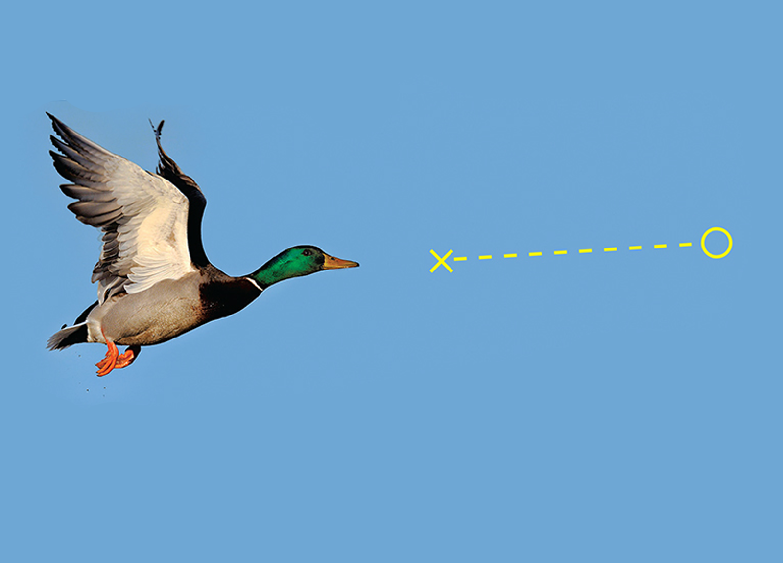 Shotgun Skills: Three Best Ways to Hit Birds